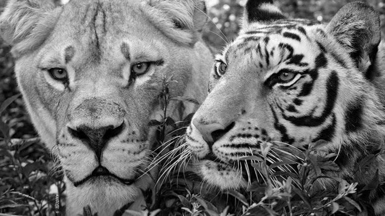 imagen-blanco-negro
