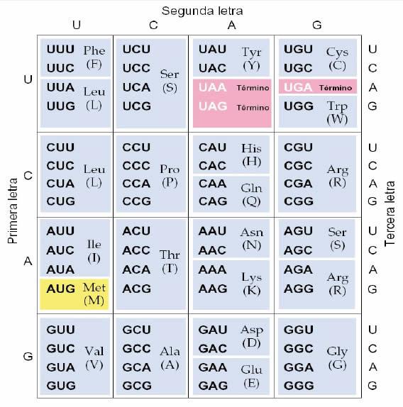 tabla-de-transformación-aminoácidos